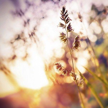 Naturopathic Detox Program